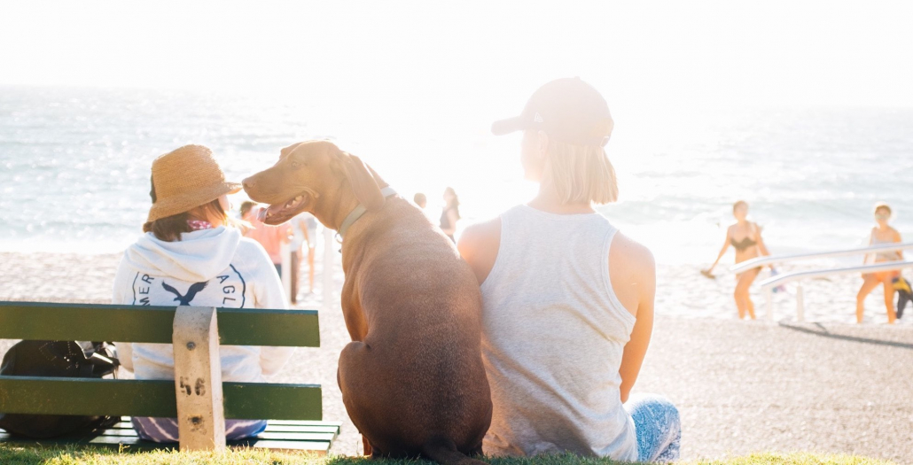 Urlaub mit Hund: Mädchen mit Hund sitzen am Strand in der Sonne