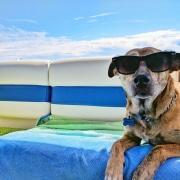 Brauner Hund mit Sonnenbrille auf Boot