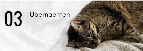 Gestreifte Katze schläft im Bett