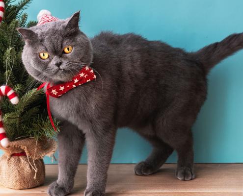 wenig begeisterte Katze mit Weihnachtsschleife neben Plastikbaum