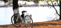 Fahrrad mit Baum und See im Hintergrund