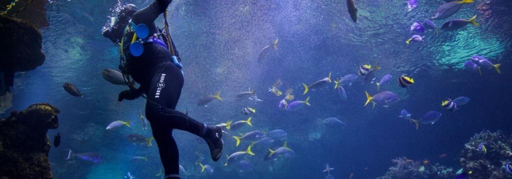 Mensch im Wasser von Fischen umgeben